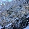 雪の華と桜の花を合わせて初詣。