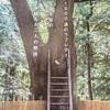 住所が有るオークの大木から生まれる出会い。