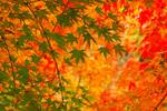 紅葉と温泉を満喫できる!日本国内の絶景の「紅葉露天風呂」を楽しめるホテル8選