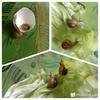 わが家の小さな自然 蝶-1-