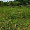 鹿俣山の花々    2010.6.12