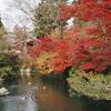 日本の紅葉(その1)