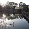 続・東京大手町散歩『大手門と大手濠 白鳥と枝垂れ桜』