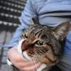 2月前半の #ねこ #cat #猫 その1