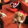 昨年のクリスマスでの出来事。