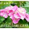 6月/水無月/みなづき/June ✾梅雨の時季になりました⛆