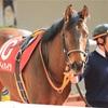 京都牝馬S2019のデータ其の1