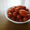 ミニトマト,簡単に収穫できて家計的にも助かる。でも、生ゴミからも勝手に生えてきて…?