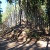 木漏れ日いっぱい御岳山と日の出山さんぽ