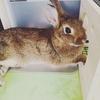 すみっこ好きなウサギのちまき