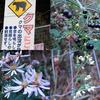 クマよけフェンスの植物