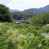 日影乗鞍から小仏城山、城山から高尾山山頂へ、高尾山からいろはの森下山で日影へ