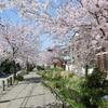 葉桜の季節にプーチンの「ハイブリッド戦争」とRTの活躍