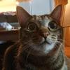 ツンデレ猫の「デレ」に手を焼く飼い主
