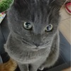 『カーヤ』猫の名前の由来