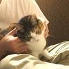 【愛猫日記】毎日アンヌさん#29