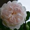 クレア・オースチン&ジェントル・ハーマイオニーの開花