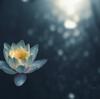 予定詳細:1/25(月)|瞑想ヒーリング
