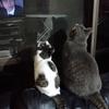 不仲猫のシンクロ写真に写り込んだ最強のふたり 映画はアメさんへ丸投げ (゚▽゚*)♪。