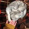 【愛猫の免疫力アップに】セラプト2ヶ月目レビューと今後のお話