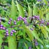 10月の花壇、、、(2)