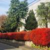 中央地区の紅葉・黄葉(2020/12/13)
