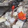 アフリカ編 南アフリカ ガーデンルートドライブ2日目(10)Agulhas岬、周囲のカフェ情報。