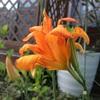 庭への想い2