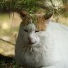 11月後半の #ねこ #cat #猫 番外編 ─三渓園の猫と紅葉