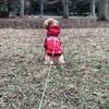 ◆エマちゃん♪おさんぽの練習中~秋の散歩道