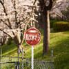 地元の桜 2021「ご近所 本番編」Ⅸ