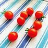 2017年の夏トマトを色々してみた記録