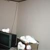 内壁クロス張替え3(台所の簡易施工01)