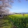 「九州花見」宮崎県西都市|西都原の桜と菜の花が凄いので見所を紹介する!