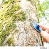 夏休み、親子で学ぶ 樹木医を講師に70人参加