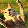 猫の爪とぎの躾け方