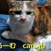 2019年12月11日 猫写真 cari.jp