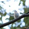 大阪城野鳥探鳥 2015/02/14 6:40-12:05