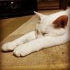 猫好きをただただ殺しにかかる記事 ~うちの猫、可愛くね?~