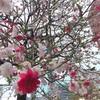 新宿を散歩していると、紅白の綺麗な花を発見♪♪