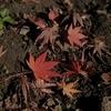 小さい秋を見つけに・小春日和の紫峰でスナップハイキング @筑波山(その4)