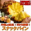パイナップルを水耕栽培する。それも沖縄名物スナックパインだ!前編