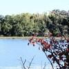 牧野ヶ池 探鳥会