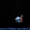 水中カメラ用としてニコンD850を検討した場合の考察記Ⅱ