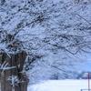 冬はいつからなのか?スピリチュアルな秋を過ごして冬を待つ