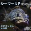 【レポ#23】魚もショーも盛りだくさん!鴨川シーワールド現地レポート(2021/4/27)【前編】