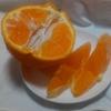春の柑橘類の中で不知火(デコポン)が味 皮の剥きやすさ コスパからオススメだと思う