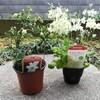春を待つ庭