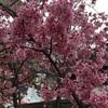【春近し、かな🌸】