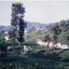 ネパ-ルの樹木と花 第12回目